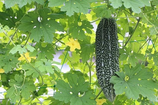 漢方的夏に食べたいカレーやゴーヤ・枝豆